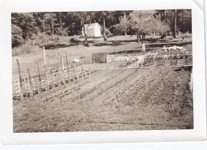 Patos garden 1953